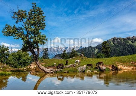 Horses grazing in Himalayas mountains in scenic Indian Himalayan landscape scenery in Himalayas with tree and small lake. Himachal Pradesh, India