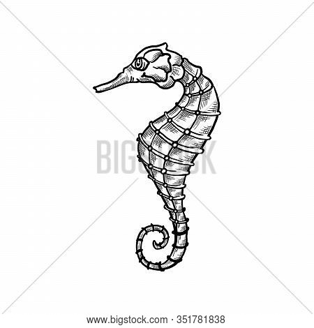 Seahorse Vector Sketch And Thin Line Art Aquatic Animal With Pencil Hatching Texture. Oceanairum And