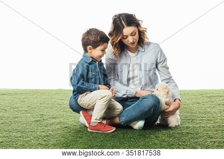 Mother And Smiling Son Looking At Havanese Puppy Isolated On White