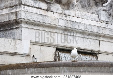 Creating Joy In Public Space. Sea Gulls On Ancient Fountain. Gull Birds On Monumental Fountain. Seag