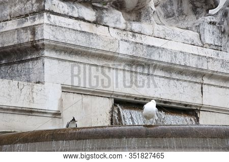 The Beauty Of Moving Water. Gull Birds On Monumental Fountain. Sea Gulls On Ancient Fountain. Seagul
