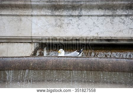 The Fun Side Of Water. Using Water In Architecture. Sea Gull Bathing In Ancient Fountain. Seagulls O