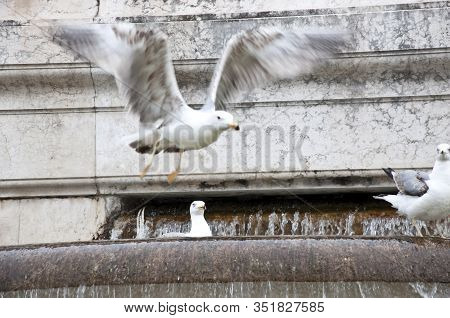 Integrating Into Surroundings. Architectural Water Feature. Gull Birds On Monumental Fountain. Seagu