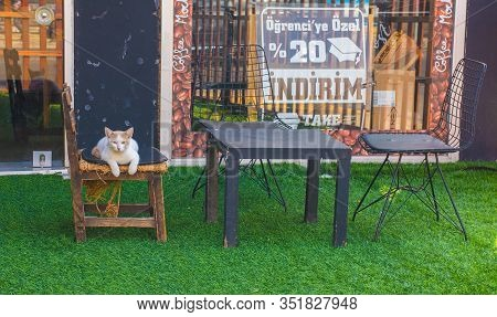 Istanbul, Turkey - September 17th 2019. One Of Istanbuls Numerous Street Cats Sits Outside A Cafe In