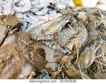 Closeup Abstract Image Of Raw Fresh Shrimps And Fishes At Market