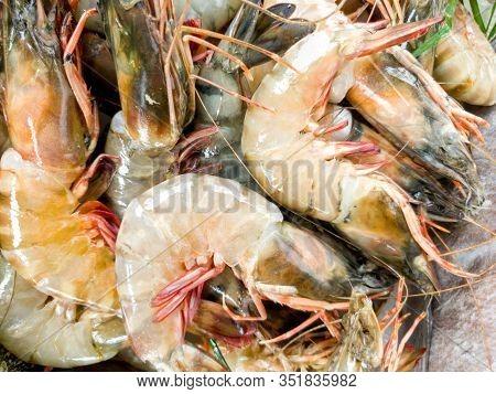 Closeup Image Of Ocean Jumbo Prawns On The Counter At Seafood Restaurant
