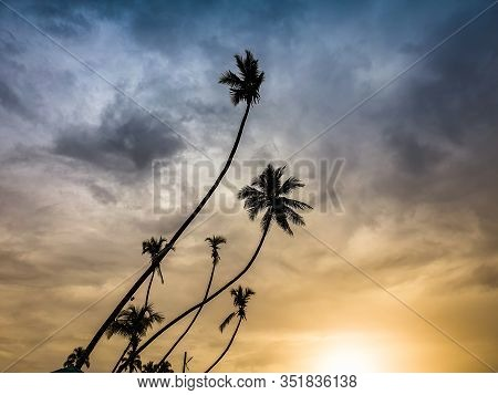 Silhouettte Of High Coconut Palms On The Tropical Island Against Sunset Evening Sky