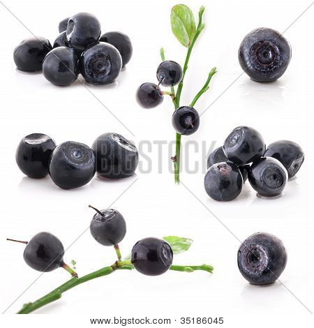 Collection of Bilberry