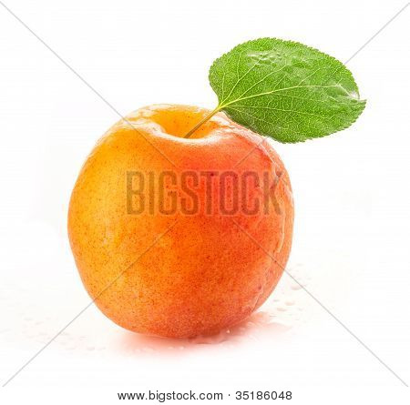 Apricot with green leaves