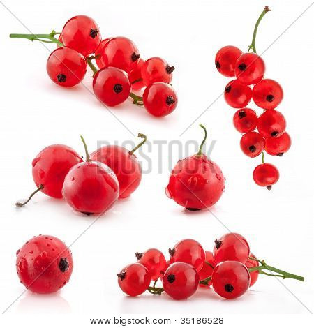 Collection of red currant