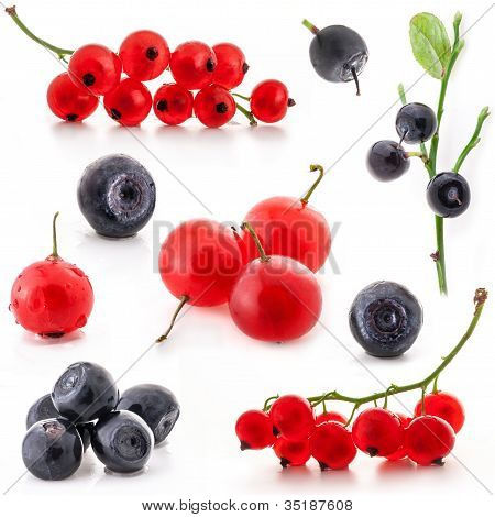 Red currant and bilberry