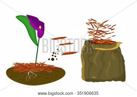 Mulch Gardening Concept  With Calla Lilies, Red Mulch And Bag Isolated On White Background. Agricult