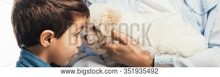 Panoramic Shot Of Woman Holding Cute Havanese Puppy And Son Looking At It Isolated On White
