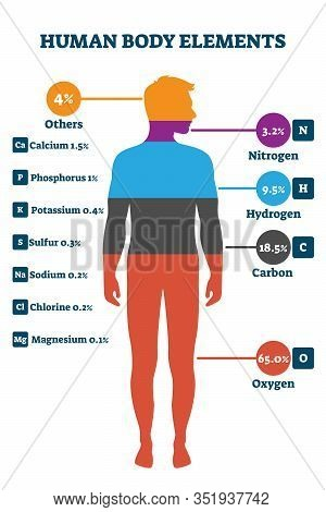 Human Body Elements, Vector Illustration Infographic. Proportional Percentage For Nitrogen, Hydrogen