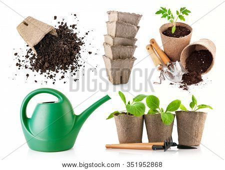 Gardening farming. Seedlings tomato and cabbage in peat pot with scattered soil and garden tool. Set for growing in bed with watering can. Isolated on white background.