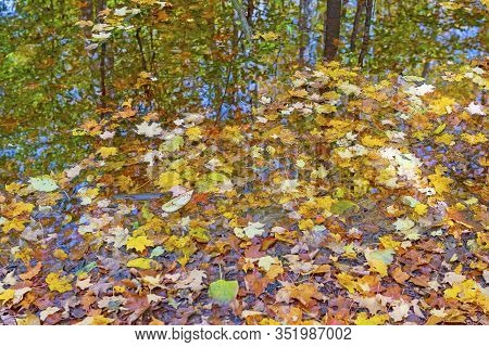 Pastel Leaves And Autumn Reflections In A Forest Pond In The Louis M Groen Nature Preserve In Michig