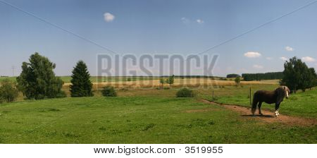 Lonesome Horse On A Paddock