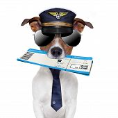 boarding pass dog with hat and tie poster