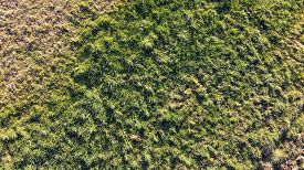 Top Aerial View Of Green Grass In Wild Fields, Savoy, France