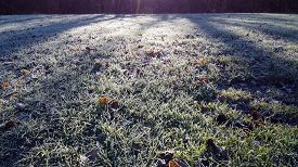 Ice Frozen Grass And Leafs On Morning In Meadow, Savoy, France