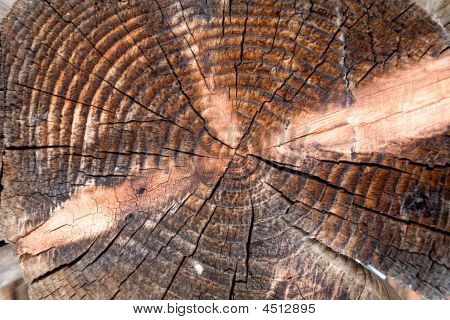 Brown Stump