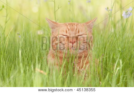 A blissfully happy orange tabby cat enjoying life in tall spring grass in a shade, with his eyes closed poster
