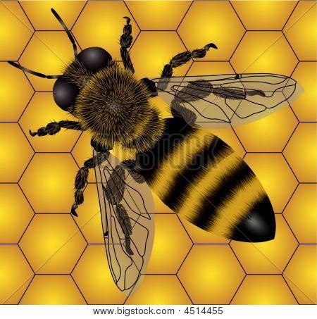 Bee On Honeycombs (seamless)