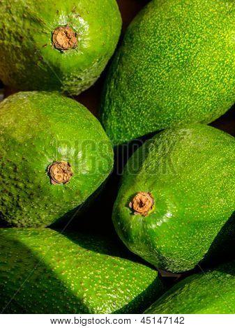 Green Avacado Background