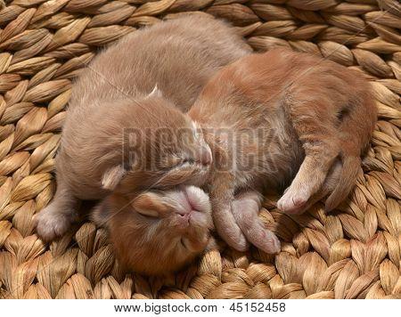 two little red kittens slipping in wisker basket