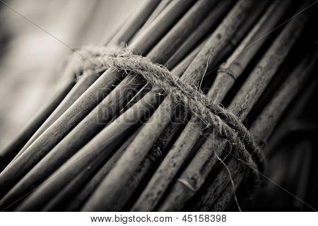 Bundle Of Bamboo Stalks