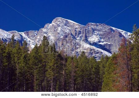 Colorado Rocky Mountains And Pine Trees
