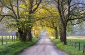 Cades Cove Great Smoky Mountains National Park Scenic Landscape Spring photography on Sparks Lane poster
