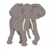 An illustration of a gray african elephant poster