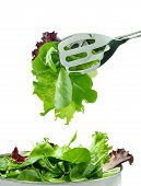 lettuces. spring mix. eat fresh. poster