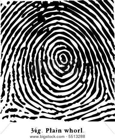 Fingerprint Plain Whorl