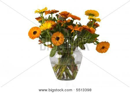 Orange Flowers In A Vase With Water On White