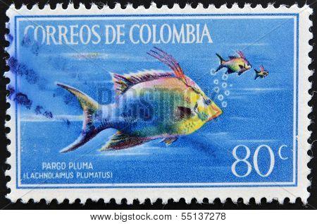 Stamp printed in Colombia shows Pargo Pluma lachnolaimus plumatus