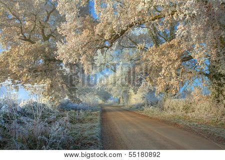 Hoar Frost, Cotswolds