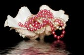 pearl necklaces in a sea shell with water reflection on black background poster