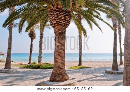 Lucky Palms