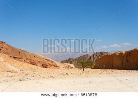 Desert landscape with acacia trees