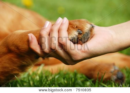 Dog Paw And Hand Shaking