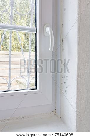 Damp Mold on Wall and Window Frame