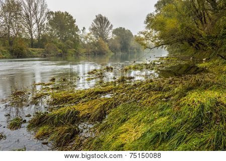 Forest Foggy River Bank