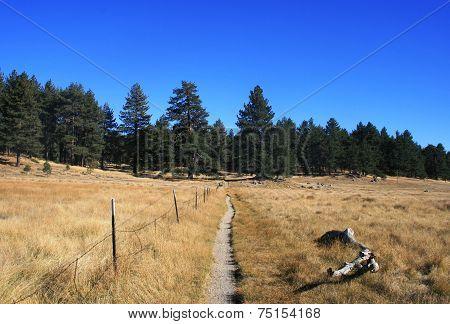 Big Laguna Meadow Trail