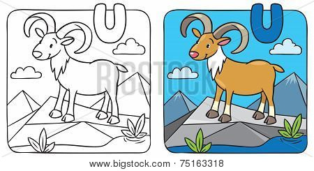 Coloring picture of funny urial. Alphabet U