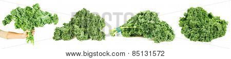 A bundle of curly-leaf kale isolated white background.