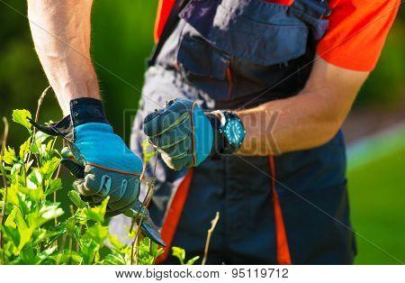 Plants Trimming Closeup