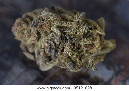 Bordello Medical Marijuana Indica