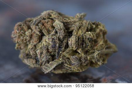 Bordello Indica Medical Marijuana